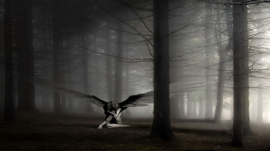 wings_in_solitude